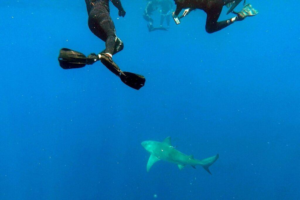 رجل يحصل على الأموال نظير السباحة مع أسماك القرش